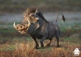 The Lion King: Pumbaa character design