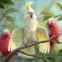 Gang of Cockatoos by Blunell