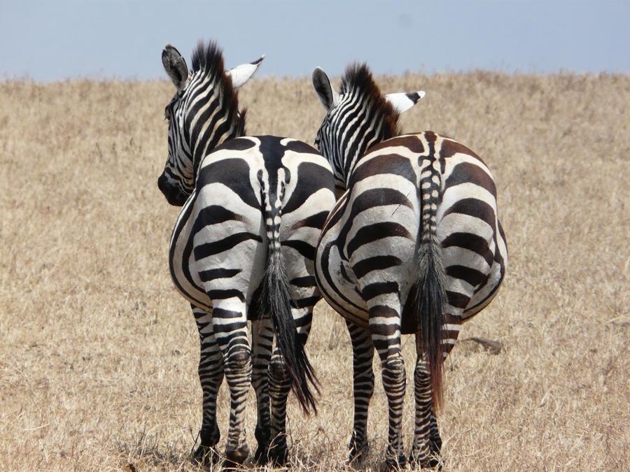 Zebra D Images - Reverse Search