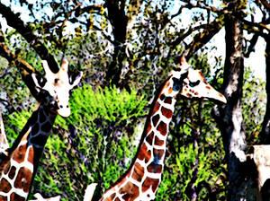 Styalized Giraffe