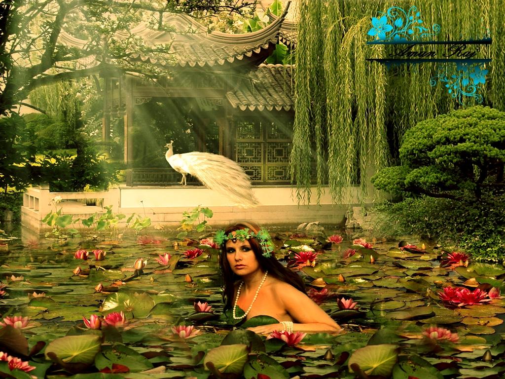 Water Lily Pond By Amanraj4u On Deviantart