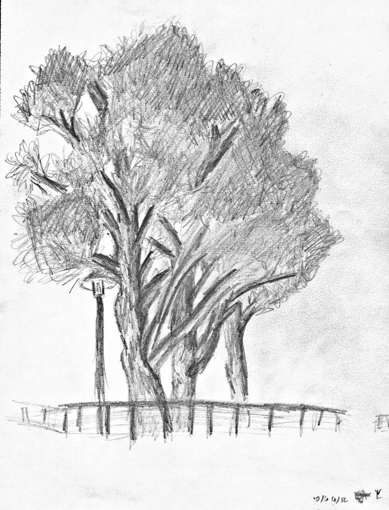 Croquis d 39 arbre by yanis lopez on deviantart - Croquis arbre ...