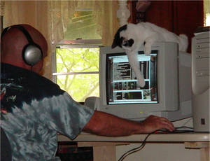 cat playing with computer