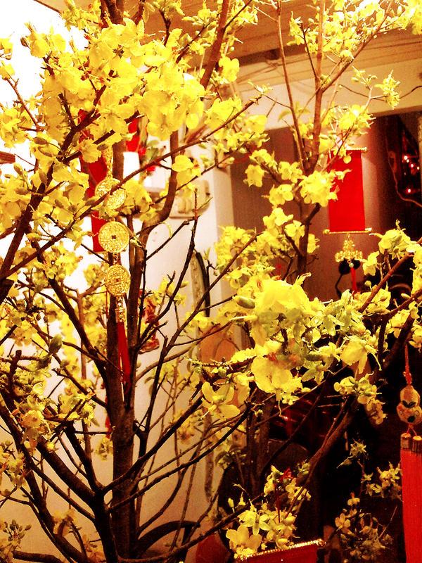 Happy Lunar New Year- Hoa Mai by Alzheimer13 on DeviantArt