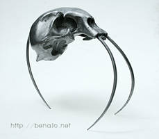 Tiger skull by benalo