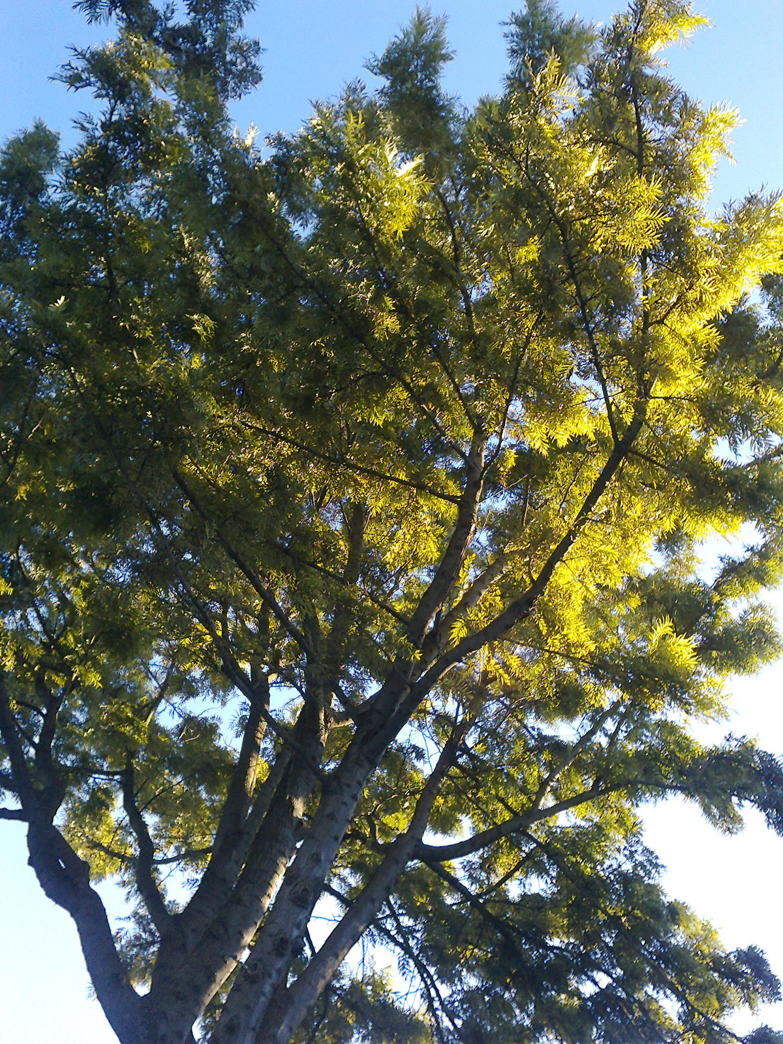 The Trees and Me - Garden - 2012-12-28.2 by Kay-March