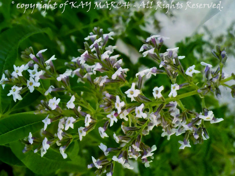 The Wild Nature and Me - Gardens - 2016-10-15.3.3 by Kay-March