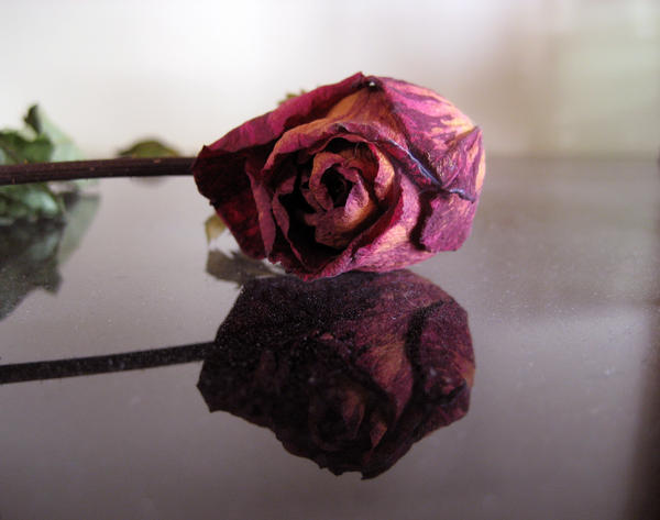 how to cut dead roses