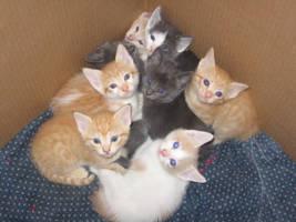 Kittens by fragilesoul-ah