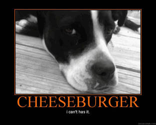 I Can't Has Cheeseburger. by chivos