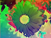 Flowerpower 5 by CarneTiger