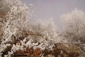 Winter fog by ohlopkov