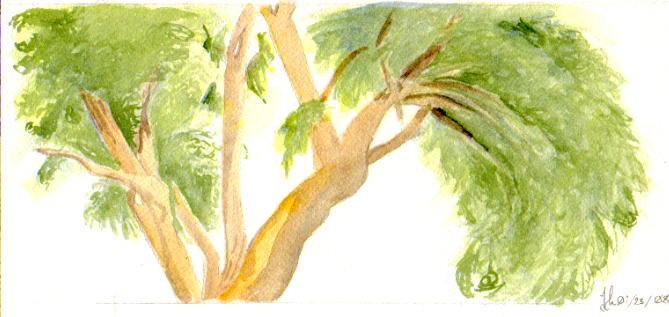 Spanish Tree by LACW