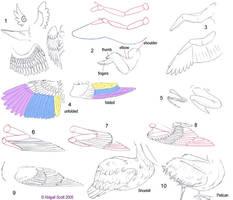 Folded Bird Wings