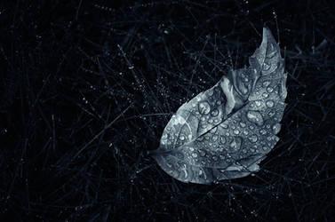 Silver Leaf by MikkoLagerstedt