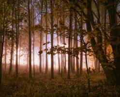 Glowing Forrest II by MikkoLagerstedt