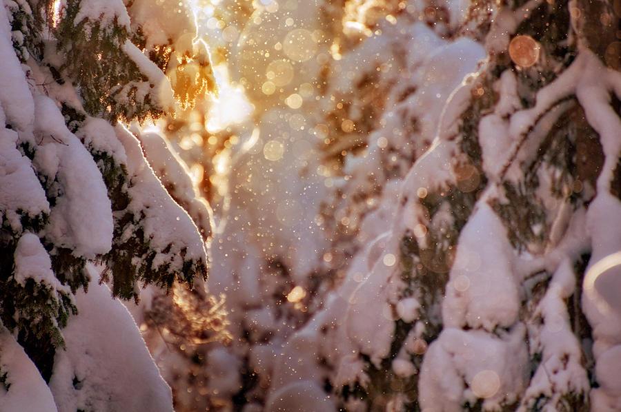 Sparkling Light II by MikkoLagerstedt