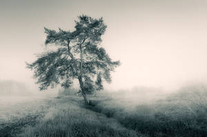 Lonely by MikkoLagerstedt
