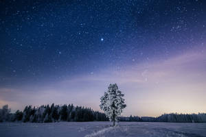 Something About a Tree II by MikkoLagerstedt