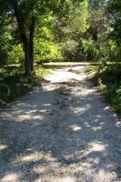 Shady Path by aquaviann