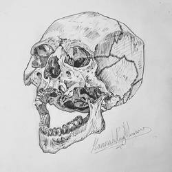 skull by HraMunro