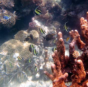 Diversity of life, Zanzibar by ukwreckdiver