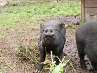 Happy pig by LonelyShade4