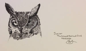 Junior The Great Horned Owl Sketch