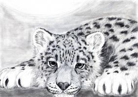 Straight Stare by Pawlove-Arts