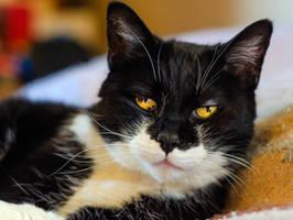 Sassy Cat by Loffy0