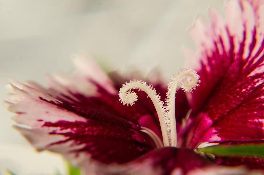 Floral Fuzz