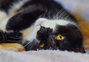 Twirly Kitty