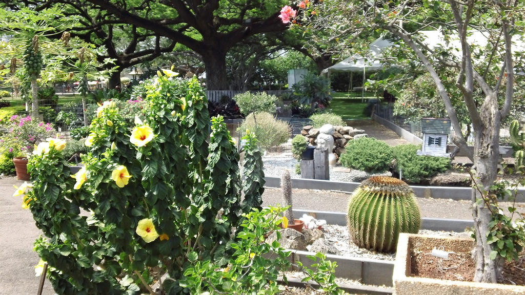 Honolulu Zoo\'s Garden by Madame-Kikue on DeviantArt