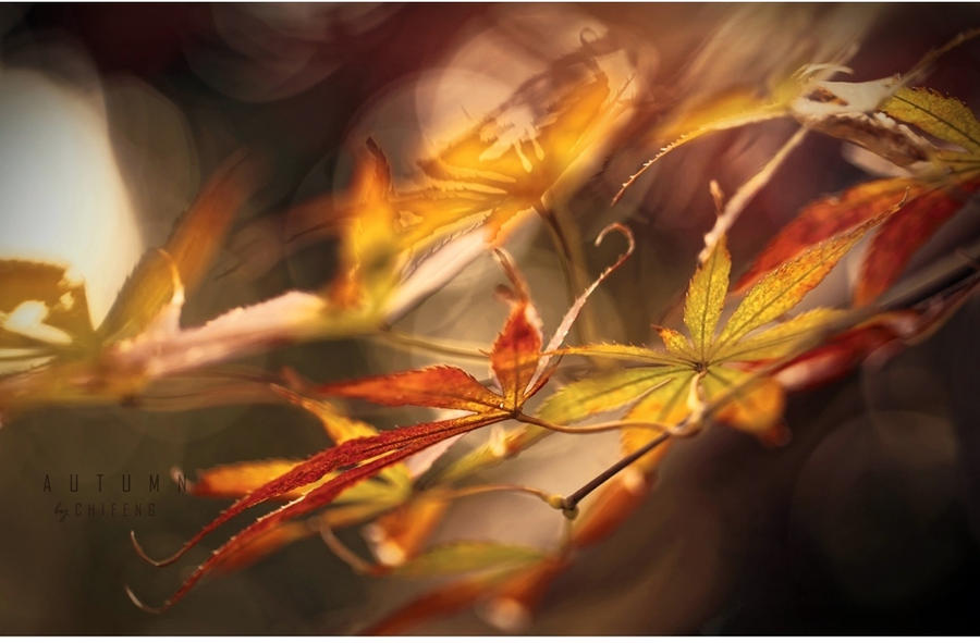 Autumn by ChiFeng-dA