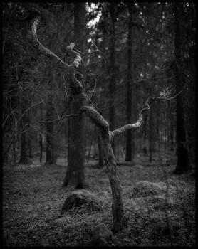 Oxhagen Forest