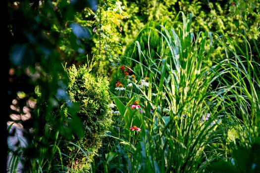 Frame of Summer Garden