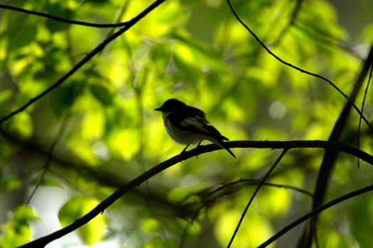 It looks like willow warbler