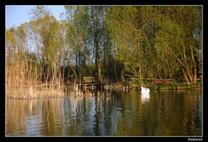 36 - Swan Lake by adamsik