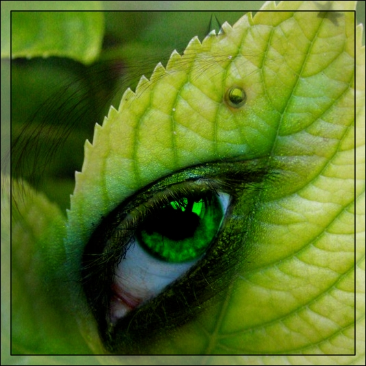 Leaf Eye by Darin69