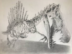 the skeleton of a Spinosaurus