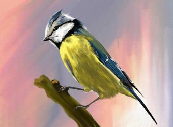 Bird by DobermannRU