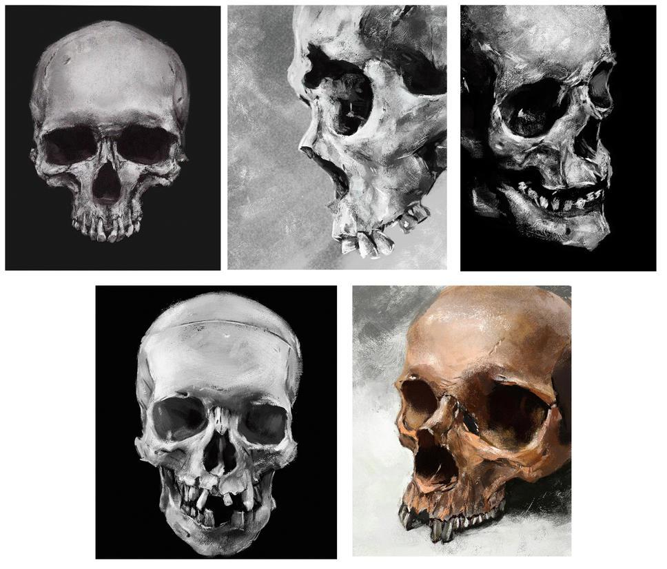 Skull Study # 1 by DobermannRU