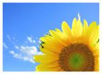 SunSaluteFlower by tinylittletyna