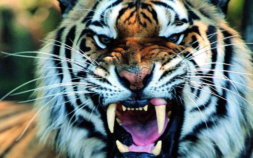 Sfondi animali pc hd 022 by undeadofficial on deviantart for Sfondi animali hd