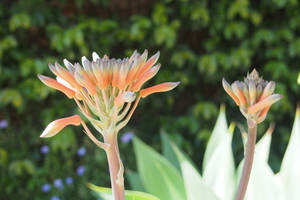 Flower on Campus 3
