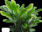 Plant 2 (STOCK)