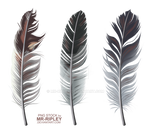 Feathers (STOCK)