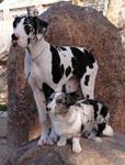 Tall dog, short dog!