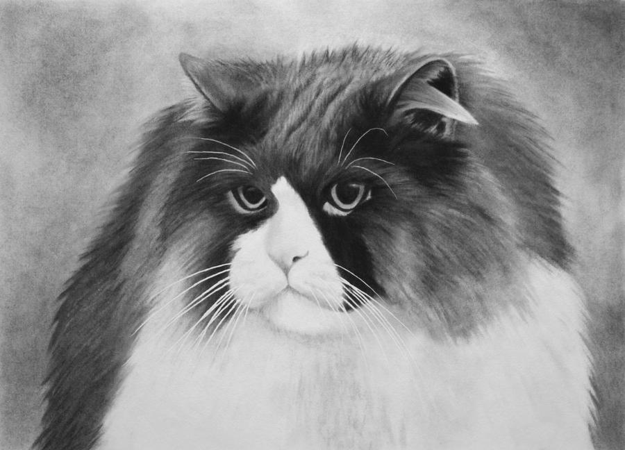Tobi, charcoal by Panthera11
