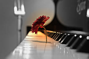 Flower and Piano by imadrinkyersoda